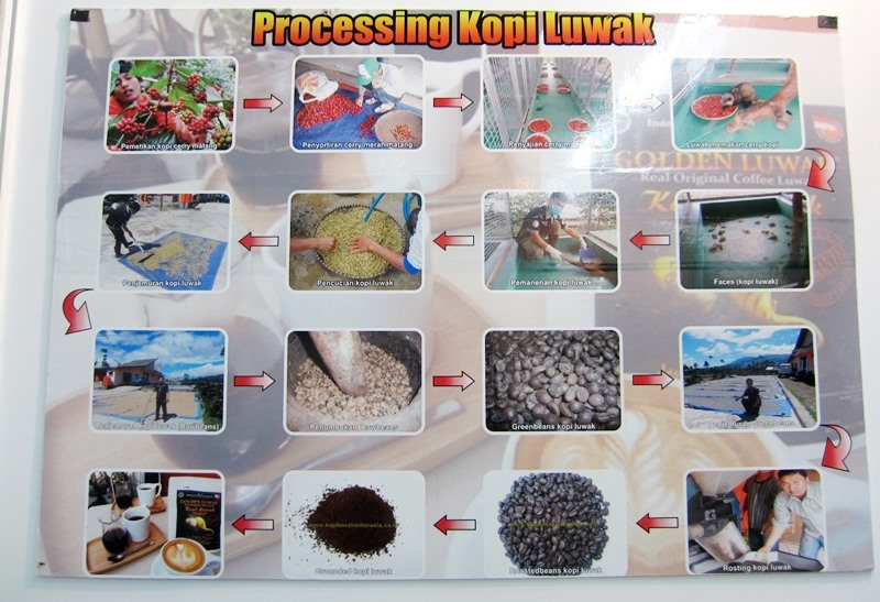 Café Luwak - Trade Expo Jakarta 2013